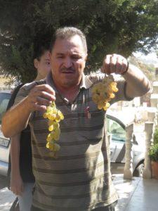 אבו חמדאן מראה את זני הענבים השונים.